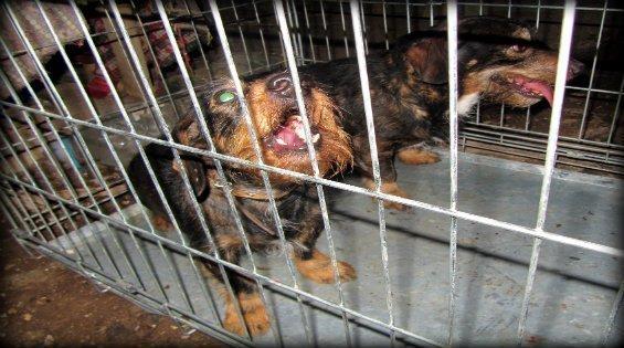 perros rescatados con lazo