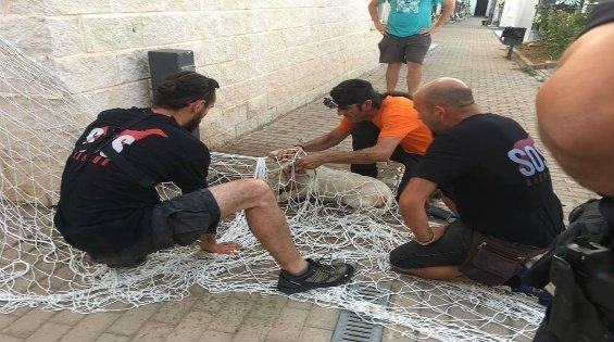 galgo rescatado, rescate de galgos, rescate de galgos y podencos, rescate de podencos, rescata jaula trampa